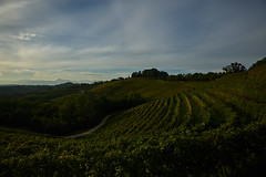 Savorgnano del Torre (paolo-p) Tags: vigneti wineyards linee lines nuvole clouds savorgnanodeltorre povoletto