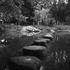 Stepping Stones (holtelars) Tags: mamiya mamiyac220f c220f tlr twinlensreflex twinlens mamiyasekor 55mm f45 6x6 square squareformat 120 film 120film analog analogue ilford ilfordfp4 fp4plus 125iso mediumformat blackandwhite classicblackwhite bw ishootfilm monochrome filmforever filmphotography xtol jobo atl1500 larsholte homeprocessing profisix sbc riverharbourne tuckenhay devon england river water landscape