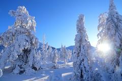 -60C in Yakutia (yakutian ninja) Tags: winternature nature sakha poleofcold russiannature cold oymyakon fareast fareastrussia yakutia winter