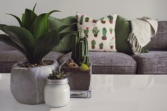 Photo of Plants on the Table (toptenalternatives) Tags: cactus plant contemporary couch decor decoration decorative design furnitures home houseplants indoor plants indoors interior leaves living room luxury modern pillows pot relaxation seat sofa succulent table throw vase