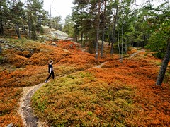 P7295276-Edit.jpg (marius.vochin) Tags: googlevision labels rano scandinavia sweden archipelago autumn biome deciduous ecosystem forest geologicalphenomenon grass hiking landscape leaf nature outdoor path plant rock soil tree vegetation wilderness woodland