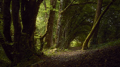 (elgunto) Tags: trees forest light day colors green countryside france lotetgaronne magic fairy imagination sonya7 konicaminolta zoomlens minoltaaf1735mmf284 adapter laea4 landscape environment nature