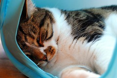 Brian's snoozing Sunday (zawtowers) Tags: brian cat feline kitty cute snooze sunday afternoon play tent resting relaxed content happy adorable afsnikkor50mmf18g 50mm fifty snoozing lying down restful