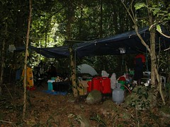 Chiperone forest camp1