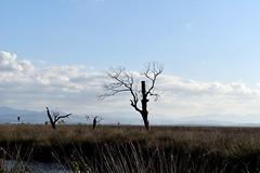 Samsun - Kuşcenneti (boraerdil) Tags: samsun kuşcenneti ağaç yeşil doğa bulutlar bulut