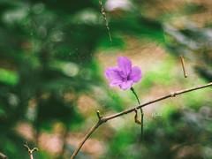 Flower (Ngoc Black) Tags: meyertrioplan50mmf29 meyer meyertrioplan m42 manualfocus macro tubemaro em1 omdem1 olympusomdem1 olympus flower