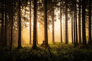 forest series #86