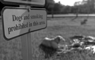 Dog Prohibited