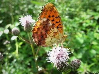 Butterfly 1724