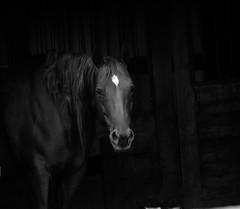 Horse In Hiding (Tim @ Photovisions) Tags: animal storm barn horse nebraska blackandwhite monochrome gagecounty