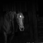 Horse In Hiding thumbnail