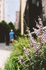 High Line (Thomas Ohlsson Photography) Tags: chelsea fujifilmxt2 fujinonxf1855mmf284rlmois highline manhattan newyork park thehighline thomasohlssonphotography walking