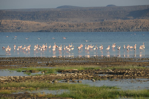 Fenicotteri al Lago Abbé