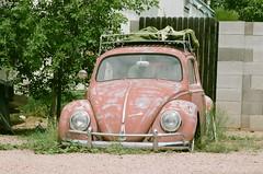 (jordyboardy) Tags: pro400h fujifilmpro400h fujifilm filmphotographer volkswagenbeetle vwbeetle vwbug vintagebug vintagebeetle