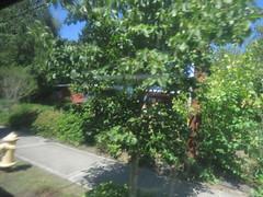 IMG_8341 (Andy E. Nystrom) Tags: bellevue washington wa bellevuewashington