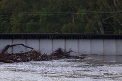 IMG_5159.CR2 (jalexartis) Tags: fayetteville fayettevillenc fayettevillenorthcarolina aftermath capefearriver hurricaneflorence crest rivercrest