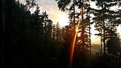 Góry Stołowe, Poland (trampinthevoid) Tags: sudety dolnośląskie dolny śląsk góry stołowe szczeliniec pasterka mountains mountain nature trees forest tree green june summer spring poland polska