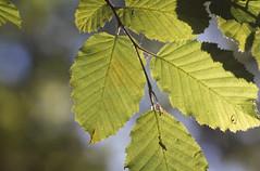 As Summer Leaves (music_man800) Tags: