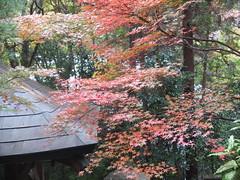 a (36) (hiromi89) Tags: japan beauty beautiful scenery flower wood pond