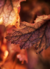 Red leaves at sunrise (Robert_Brown [bracketed]) Tags: robertbrown portland oregon macro photography photo 2018 red orange sunrise leaves glow warm warmth bokeh color detail texture