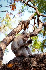 Bali, Temple de Pulaki (Calinore) Tags: indonesia bali pulaki temple monkey animal indonésie