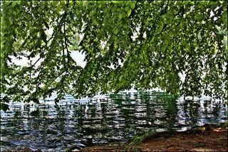 A bordo lago.