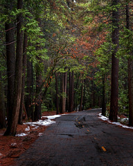 Yosemite Woods (Brady Baker) Tags: california yosemite usa travel national park nature outdoor roadway road winding trees forest pines green adventure valley snow melt spring change seasons peaceful serene calm
