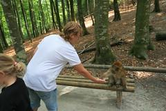 IMG_8718 (harleyhurricane1) Tags: monkeys handfeedmonkeys feedmonkeyspopcorn affenbergsalem barbarymacaques storks deer badenwurttemberg germany