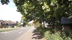 2018_09_140004 - branches and shadows in the wind (video) (Gwydion M. Williams) Tags: coventry britain greatbritain uk england warwickshire westmidlands tree