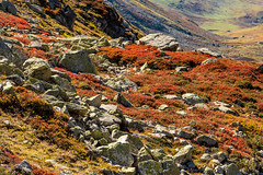Julierpass (oonaolivia) Tags: julierpass graubünden grisons schweiz switzerland landschaft landscape nature herbst autumn walking hiking