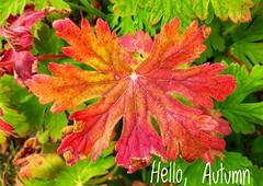 Hello, Autumn (v o y a g e u r) Tags: autumn automne otono jesien осень лист природа краски colors leaf feuille couleurs nature naturaleza natura phone cellphone smartphone samsung mobile photo