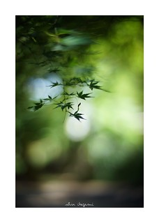 2018/8/14 - 11/18 photo by shin ikegami. - SONY ILCE‑7M2 / 七工匠  7artisans 50mm f1.1
