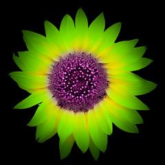 smile (m_laRs_k) Tags: omd olympus hss flower flora lightroomed