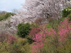 a (12) (hiromi89) Tags: japan beauty beautiful scenery flower wood pond