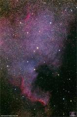North America Nebula in Cygnus (The Dark Side Observatory) Tags: tomwildoner night sky deepsky space outerspace skywatcher telescope 120ed celestron cgemdx asi190mc zwo astronomy astronomer science canon canon6d deepspace guided weatherly pennsylvania observatory darksideobservatory stars star leisurelyscientist leisurelyscientistcom tdsobservatory backyardeos ngc7000 caldwell20 northamericanebula cygnus july 2018 astrometrydotnet:id=nova2741474 astrometrydotnet:status=solved