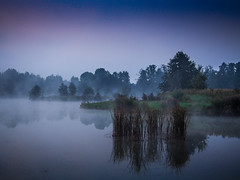 The glow of fog (Andrzej Kocot) Tags: mist water tree sky grass forest surreallandscape olympus mft m43 omd mzuiko microfourthirds fineart 1240mmf28 poland polska em10markii creative light andrzejkocot photography