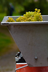 grapes_in_crusher-3_GreenBoost_Dehaze_Contrast (old_hippy1948) Tags: grpes crusher