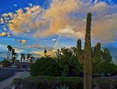 The Rainbow Connection (oybay©) Tags: suncitywest monsoon monsoon2018 arizona season rain wind summer weather sunset double rainbow color colors cactus saguaro sky skies cloudy shades curves yin and yang cheap trick surrender nature natural peoria vistancia vivid serendipity outdoor tree grass