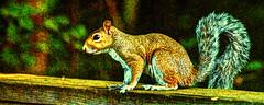 Backyard visitor (emj1300) Tags: spirit spiritual squirrel georgia green gold gray grace art animal amazing afternoon teacher matthewjeffres meditation hdr closeup color wild woodlandwonders fur pano