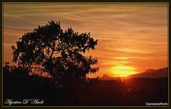 Tramonto con albero di mandorlo - 2 - (Agostino D'Ascoli) Tags: tramonto alberi mandorlo nikon nikkor sunset paesaggi nature rosso cielo landscape cianciana sicilia texture agostinodascoli sole 100commentgroup