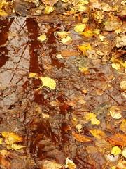 IMG_0519 Herbst / Autumn / Fall: Reflection / Spiegelung (Traud) Tags: germany deutschland bavaria bayern reflection spiegelung herbst fall autumn leaves blätter pool wasser water teich