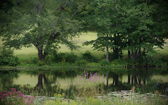 The pond at Southford Falls (Violet aka vbd) Tags: pentax vbd hdpentaxda55300mmf4563edplmwrre ct connecticut water newengland trees southfordfallsstatepark pond 2018 handheld manualexposure k1ii k1markii reflection summer2018