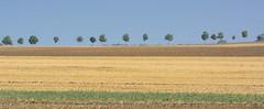 2774  Abgeerntete Felder / Acker auf der Insel Poel - Mecklenburg Vorpommern. (stadt + land) Tags: abgeerntete felder acker bilder insel poel fotos ostsee ostseeinsel wismar wismarer bucht landkreis nordwestmecklenburg mecklenburg vorpommern seebad