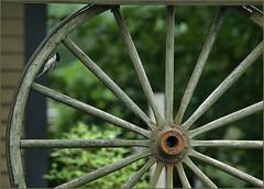 Chickadee on the neighbours' wheel (Felip1) Tags: 18828198 cartwheel