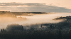 Autumn is coming (MattiBo) Tags: maisema moody mist morning summer nikon nature nuuksio nikkor beautiful travel colors scandinavia exposure autumn landscapes landscape finland forest fall golden trees tranquil