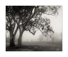 Foggy start (Mike Hankey.) Tags: published goldenstaircase landscape leura federalpass bluemountains