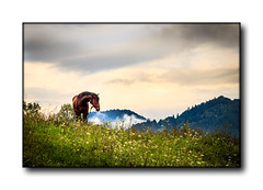 The horse on the hill (nicucricu) Tags: dualiso canon 60d 80d timisoara s5 color longexposure 400d exposure long panorama eos holiday outdoors party photo tamron speedlite s3 430ex bells clousup love macro snow black outline line flashlight design outdoor nicucricu nicu cricu nature sunset water red beach portrait night flowers blue white tree green art light sun clouds landscape street summer city trees yellow lake people house car bw old new fun digital selfie weather blur infrared ir