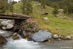 IMG_4727_DxO.jpg (Lumières Alpines) Tags: didier bonfils goodson73 mont viso tour 3841 alpes italie rando alpinisme