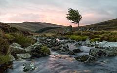 Glenmacnass River Sunrise (bella_blue_star) Tags: sunrise wicklow tree river ireland leinster landscape