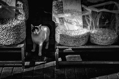 old shanghai (Robert Borden) Tags: cat peanuts between seeds street urban city streetphotography canon canonrebel canonphotography 50mm 50mmlens shanghai china oldshanghai fall2017 animal animalportrait blackandwhite bw blancoynegro monochrome monochromephotography